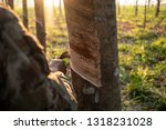 farmer tapping latex from a... | Shutterstock . vector #1318231028