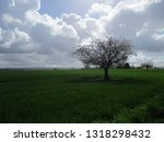 tree field clouds   Shutterstock . vector #1318298432