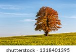solitary tree in a canola field  | Shutterstock . vector #1318401395