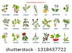 best herbs for infertility.... | Shutterstock .eps vector #1318437722