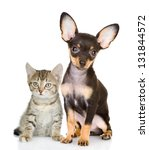 Stock photo cat with a dog attentively look in the camera isolated on white background 131844572