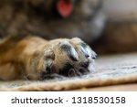 paws of german shepherd dog.... | Shutterstock . vector #1318530158