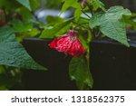 Red Flower Green Vine Wooden...