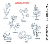 best medicinal herbs for the... | Shutterstock .eps vector #1318866752