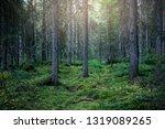 mystic green seasonal foggy...   Shutterstock . vector #1319089265