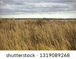 yellow dry grass in the field ...   Shutterstock . vector #1319089268