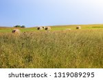 twisted yellow haystack on...   Shutterstock . vector #1319089295