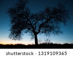 beautiful and peaceful dark... | Shutterstock . vector #1319109365