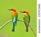 couple of bee eater bird | Shutterstock . vector #131911682