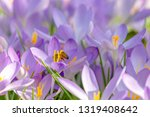 close up of beautiful flowering ...   Shutterstock . vector #1319408642