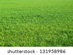 Green Grass Texture From A ...