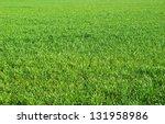 Green Grass Texture From A ...