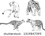 vector drawings sketches... | Shutterstock .eps vector #1319847395