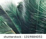 beautiful of coconut palm... | Shutterstock . vector #1319884052