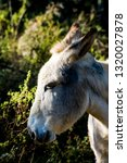 donkey in the field on a sunny... | Shutterstock . vector #1320027878