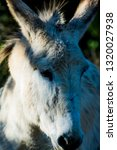 donkey in the field on a sunny... | Shutterstock . vector #1320027938