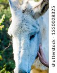 donkey in the field on a sunny... | Shutterstock . vector #1320028325