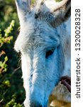 donkey in the field on a sunny... | Shutterstock . vector #1320028328