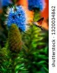 sphynx moth in flight. the...   Shutterstock . vector #1320034862