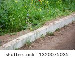 at the side of the road. bird...   Shutterstock . vector #1320075035