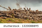 Pile Of Trees Destroyed By...