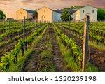 tokaj hungary cellars and...   Shutterstock . vector #1320239198