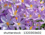close up of beautiful flowering ...   Shutterstock . vector #1320303602