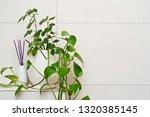 bathroom decoration pot plant...   Shutterstock . vector #1320385145