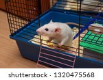 pet rat looking out from an... | Shutterstock . vector #1320475568