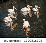 group of great white pelicans ... | Shutterstock . vector #1320516308