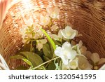 plucked jacmine flowers at... | Shutterstock . vector #1320541595