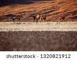 oryx antelope and orange dunes... | Shutterstock . vector #1320821912