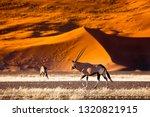 oryx antelope and orange dunes... | Shutterstock . vector #1320821915