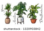Illustration Of Houseplants ...