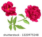 vector red peony floral... | Shutterstock .eps vector #1320975248