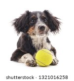 small puppy with ball isolated... | Shutterstock . vector #1321016258