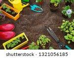 flower and vegetable seedlings... | Shutterstock . vector #1321056185