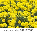 Yellow Flower  Marigold In The...