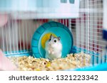 Light Hamster In A Caged Wheel