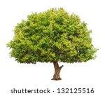 jambul  syzygium cumini  also... | Shutterstock . vector #132125516