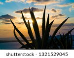 aloe cactus and sea in sunset | Shutterstock . vector #1321529045