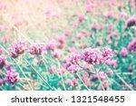 pink flower blossom field ... | Shutterstock . vector #1321548455