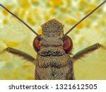 extreme macro shot gypsy moth ...   Shutterstock . vector #1321612505