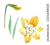 yellow narcissus floral... | Shutterstock . vector #1321658435