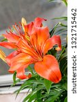 orange yellow lilies flowers ... | Shutterstock . vector #1321715462