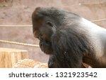 the western gorilla  gorilla... | Shutterstock . vector #1321923542
