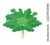 broccoli plant with the ripe... | Shutterstock .eps vector #1321952048