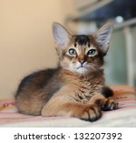 somali kitten ruddy color... | Shutterstock . vector #132207392