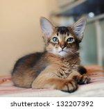 somali kitten ruddy color... | Shutterstock . vector #132207392