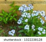 forget me nots  myosotis... | Shutterstock . vector #1322238128